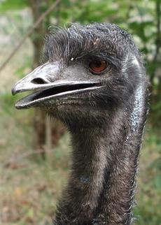 Not that EMU