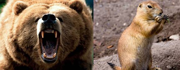 Bruin vs Gopher. Not a contest.