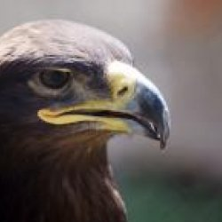 Persian Eagle's picture
