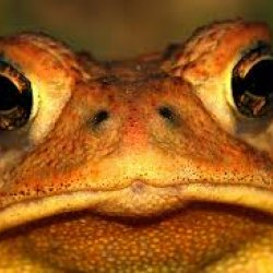 toad's picture