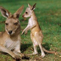 Kangarooman's picture