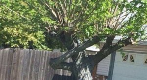 Look at this tree hitting the Dab