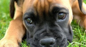 Ohio State veterinary scandal