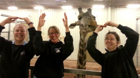Staffers and a giraffe strike the O-H-I-O pose at the Columbus zoo.