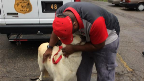 Ezekiel Elliott's dog is found.