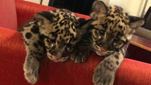Columbus Zoo's newest members.