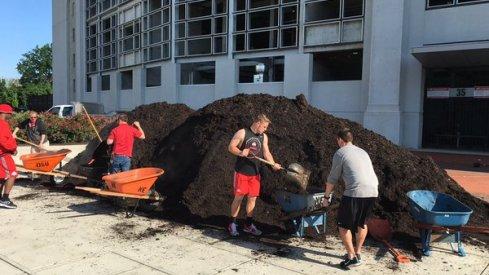 The Scarlet team mulches Buckeye Grove.