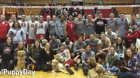 National Puppy Day with the Ohio State men's volleyball team.