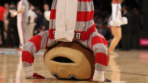 Brutus can't wait to bet on the Buckeyes.