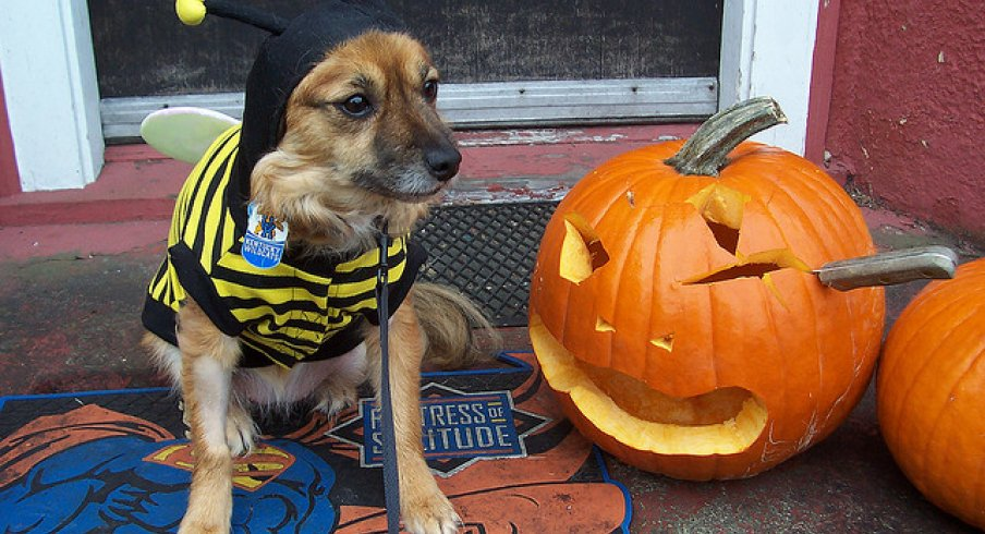 Watch out - Dog-Bee will getcha!